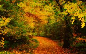 leaves, autumn, runway, trees