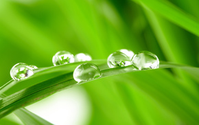 grass, drops, water, dew, green