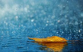 drops, water, macro, leaf