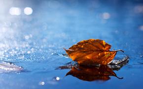 macro, yellow, autumn, leaf, water