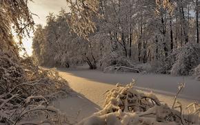 деревья, Зима, лес, снег