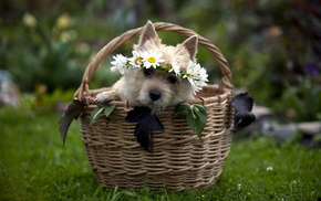 gift, basket, animals, dog