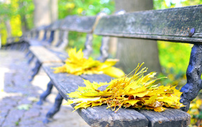 bench, park, autumn, leaves