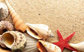 море, морская звезда, песок, лето, ракушки