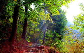 autumn, light, forest, rays, greenery