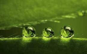 dew, drops, water, plant, green