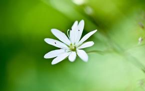 macro, greenery, white, flower, flowers