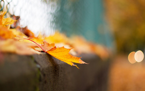 autumn, bokeh, leaf, fence, macro