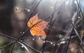 autumn, twigs, leaf, highlights, macro