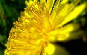 summer, flowers, flower
