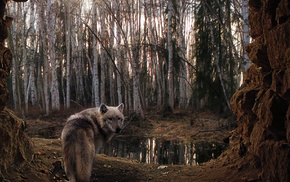 trees, cave, wolf, animals, forest