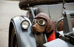 glasses, dog, motorcycle, animals