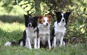 dog, animals, puppy