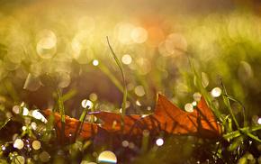 grass, leaf, highlights, drops, macro