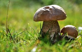 bokeh, macro, mushroom, grass