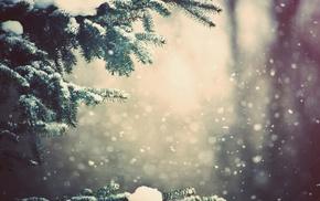 winter, fir-tree, snow