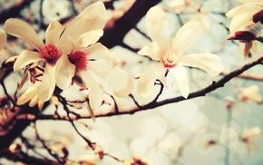 flowers, bloom