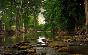 stones, river, forest, nature