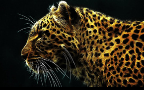 leopard, animals