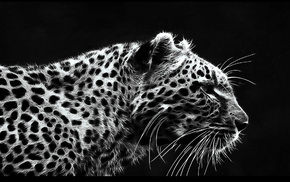 animals, leopard