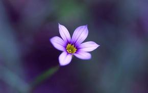 цветы, цветок, макро, Сиреневый, размытость