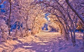 light, trees, nature, winter, evening