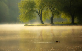 river, animals, mist, morning