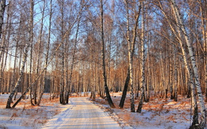 forest, winter, snow, road