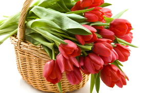 tulips, basket, flowers