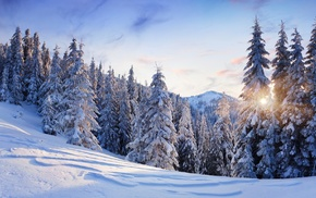 trees, mountain, snow, nature, winter