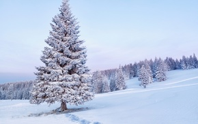 snow, Christmas tree, morning, winter, trees