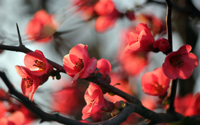 flowers, nature, twigs, tree
