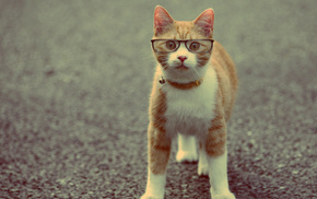cat, glasses, animals
