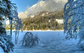 trees, snow, nature, winter