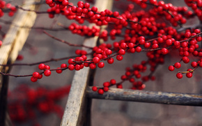 delicious, berries, tree, nature, twigs