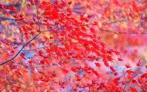 twigs, autumn, leaves, tree