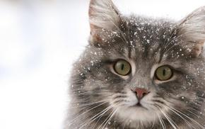 animals, cat, winter, snow