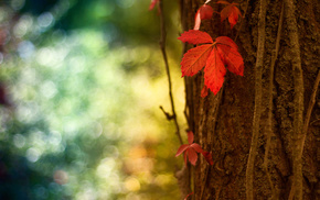 tree, leaf, highlights, red, bokeh
