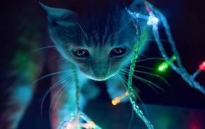 reflection, animal, cat, animals