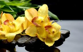 stones, flowers, macro, drops
