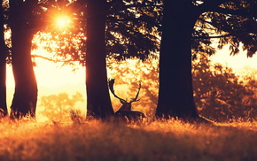 nature, deer, sunset, forest
