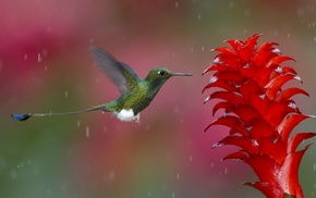 bird, nature, flower, animals, rain