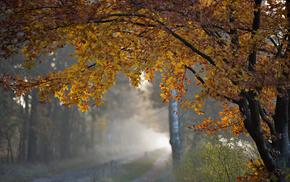 tree, nature, morning, autumn, foliage