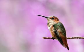 animals, background, bird, branch