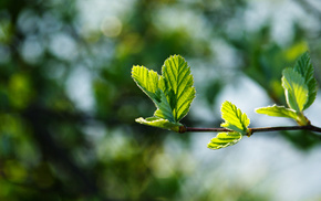 branch, macro, foliage, spring