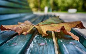 leaf, macro, autumn