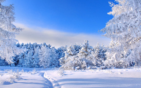 trees, winter, nature, snow
