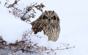 snow, owl, bird, animals