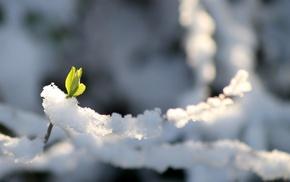 cold, greenery, winter, snow, stunner
