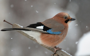 animals, snow, winter, bird